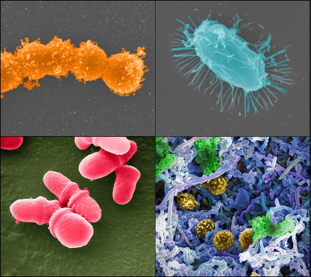 Микробиом 1